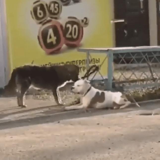 El perrito corrió a liberar a la mascota.    Fuente: Instagram/natasha_nvrs
