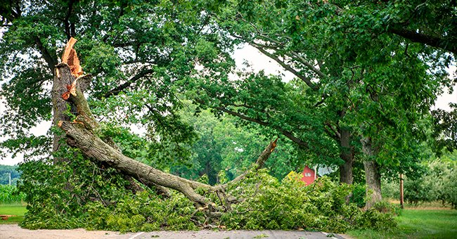 New York Vice Principal Dies after a Tree Fell on Him While during a Visit to His Parents