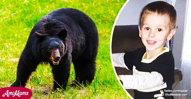 3-year-old boy who survived 2 nights in the woods says that a friendly bear kept him safe
