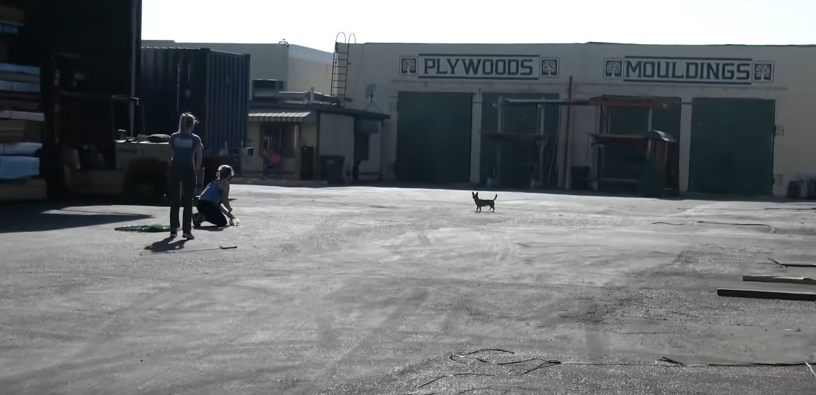 Shania auf dem Industriegelände | Quelle: YouTube/Hope for Paws - Official Rescue Channel
