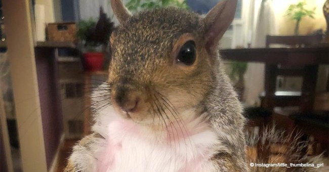 How Thumbelina the fat squirrel came to live with human parents