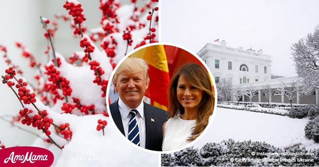 Donald Trump and wife Melania share beautiful scenic pictures of snowy D.C.