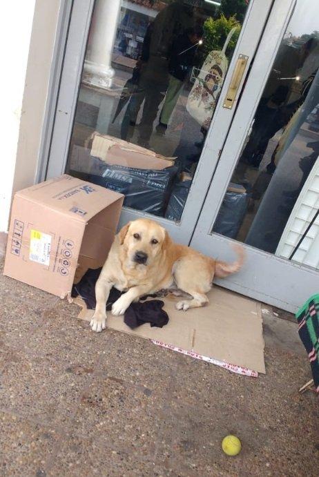 Hund wartet vor Krankenhaus auf Herrchen | Quelle: Twitter/GabrielaInglese