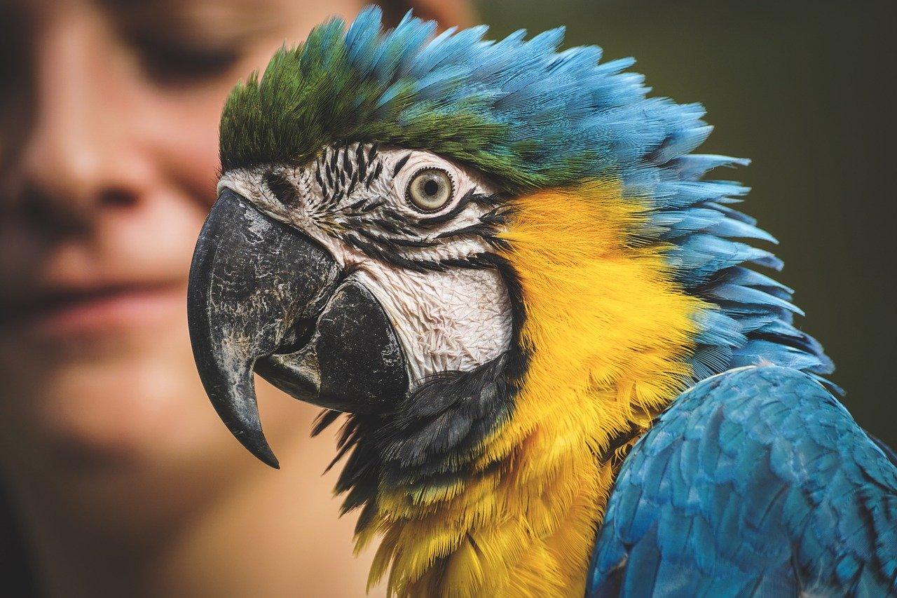 A close-up image of a parrot with a blurry photo of a woman in the background | Photo: Pixabay/suju-foto