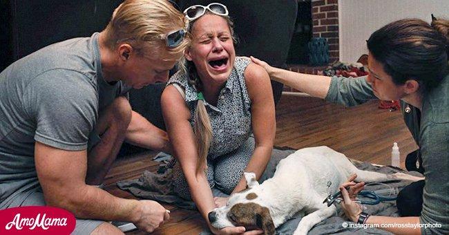 Herzzerreißende Bilder zeigen die Trauer der Besitzer, die sich von ihren Hunden verabschieden