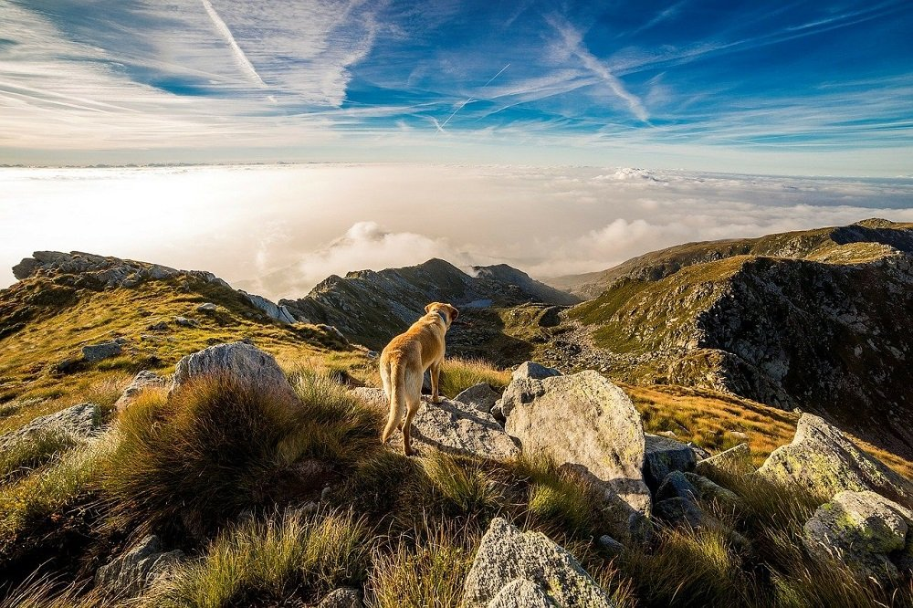 A dog standing on the top of a mountain. | Image: Pixabay.