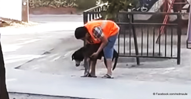 Hombre fue capturado ayudando a su perro anciano a caminar y conmovió a las redes