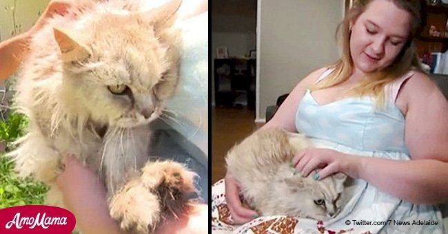 Unbelievable reunion: woman finds a cat she lost 14 years ago