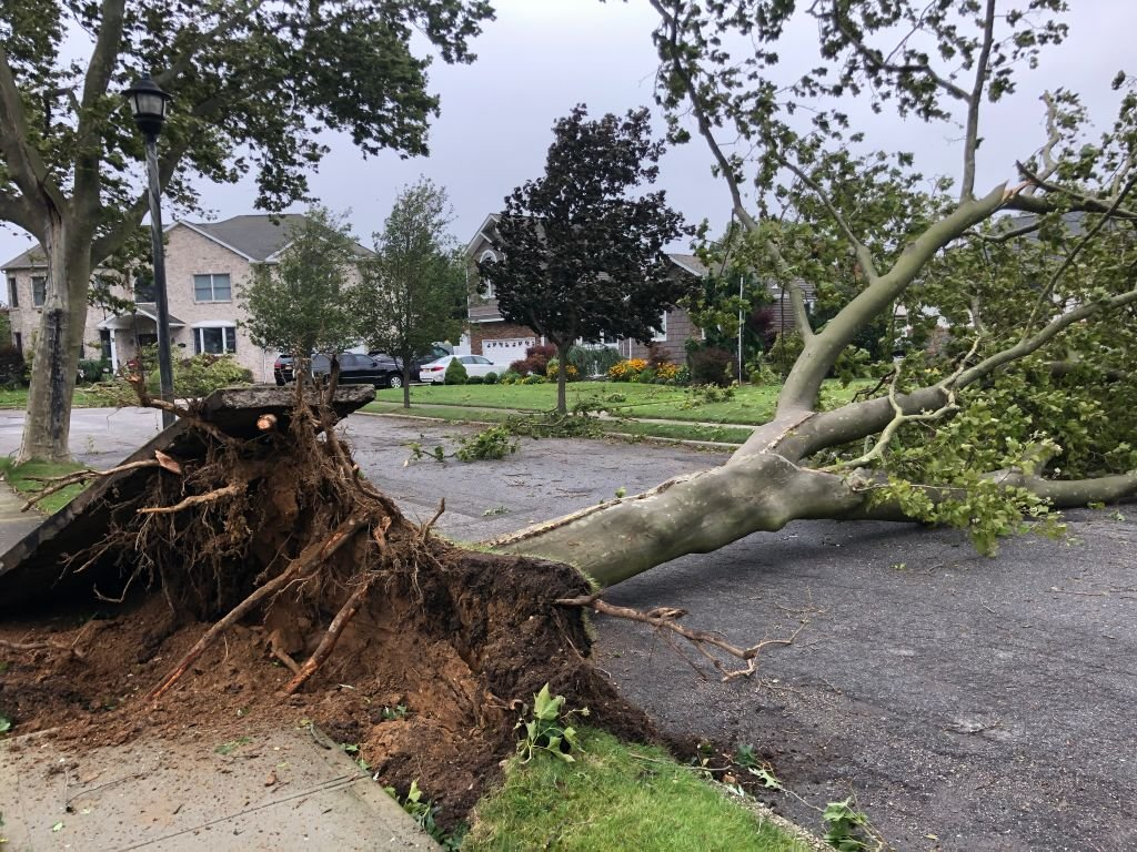 High winds from Tropical Storm Isaias brought down a tree on August 4, 2020 | Photo: Getty Images