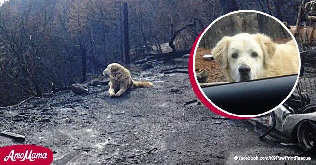 Ein treuer Hund wartete vor dem abgebrannten Haus ein Monat nach dem Waldbrand auf seine Besitzer
