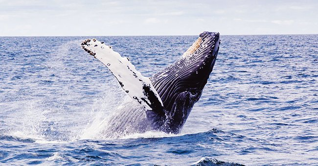 Daily Joke: A Teacher Asked Her Class What They Knew about Whales