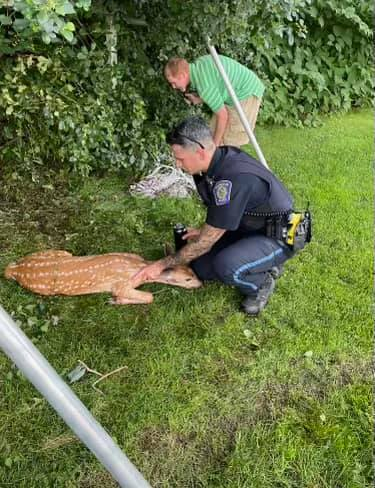 A police officer can be seen comforting an injured deer | Photo: Facebook/Foxborough Police Department