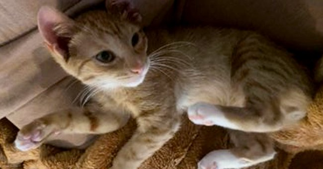 Kitten Escapes Death as Good Samaritans Stop Him from Being Crushed by Garbage Truck Compactor