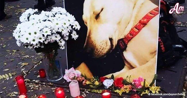 Dueño de Sota, la perra asesinada en Barcelona, conmemora a su querida compañera con todo el mundo