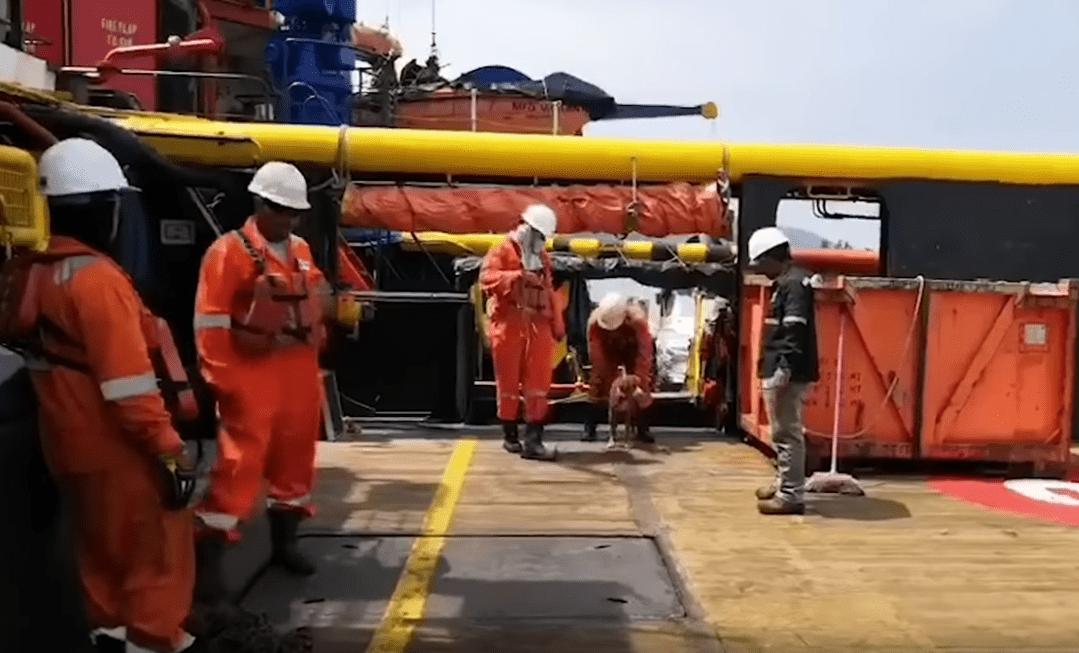 Trabajadores de la plataforma atendiendo al perro rescatado. | Imagen: YouTube/Viral Press
