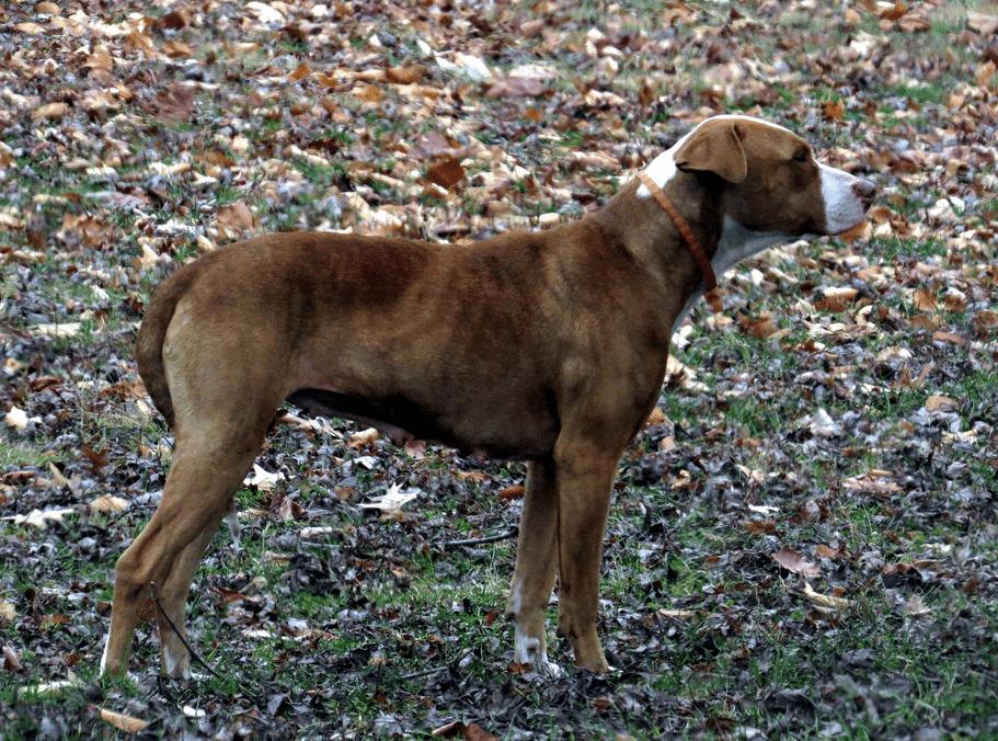 Perro perdido en un parque. | Imagen: Flickr