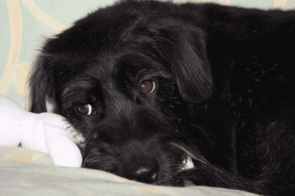 Perro triste. | Imagen tomada de: Pxhere