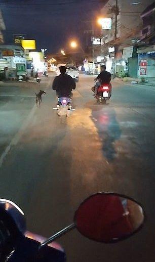 Perro corriendo tras la camioneta de sus dueños.| Imagen tomada de: YouTube/Viral Press