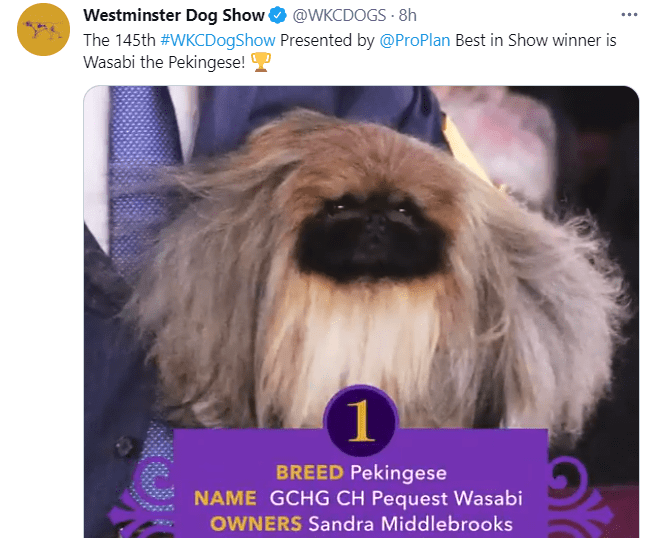 Wasabi announced as the Best in Show winner at the Westminster Kennel Club Dog Show on June 13, 2021   Photo: Twitter/@WKCDOGS