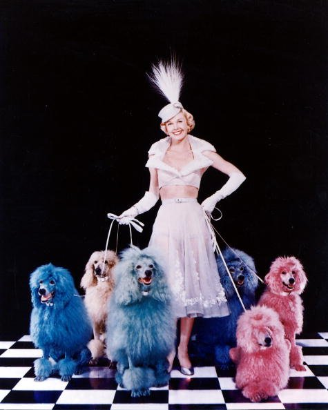 Doris Day poses with an array of multi-coloured poodles in 1952. | Photo: Getty Images