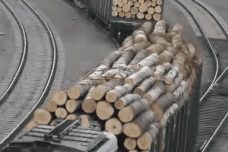 Illegal loggers smuggling timber | Photo: Youtube/EIAEnvironment
