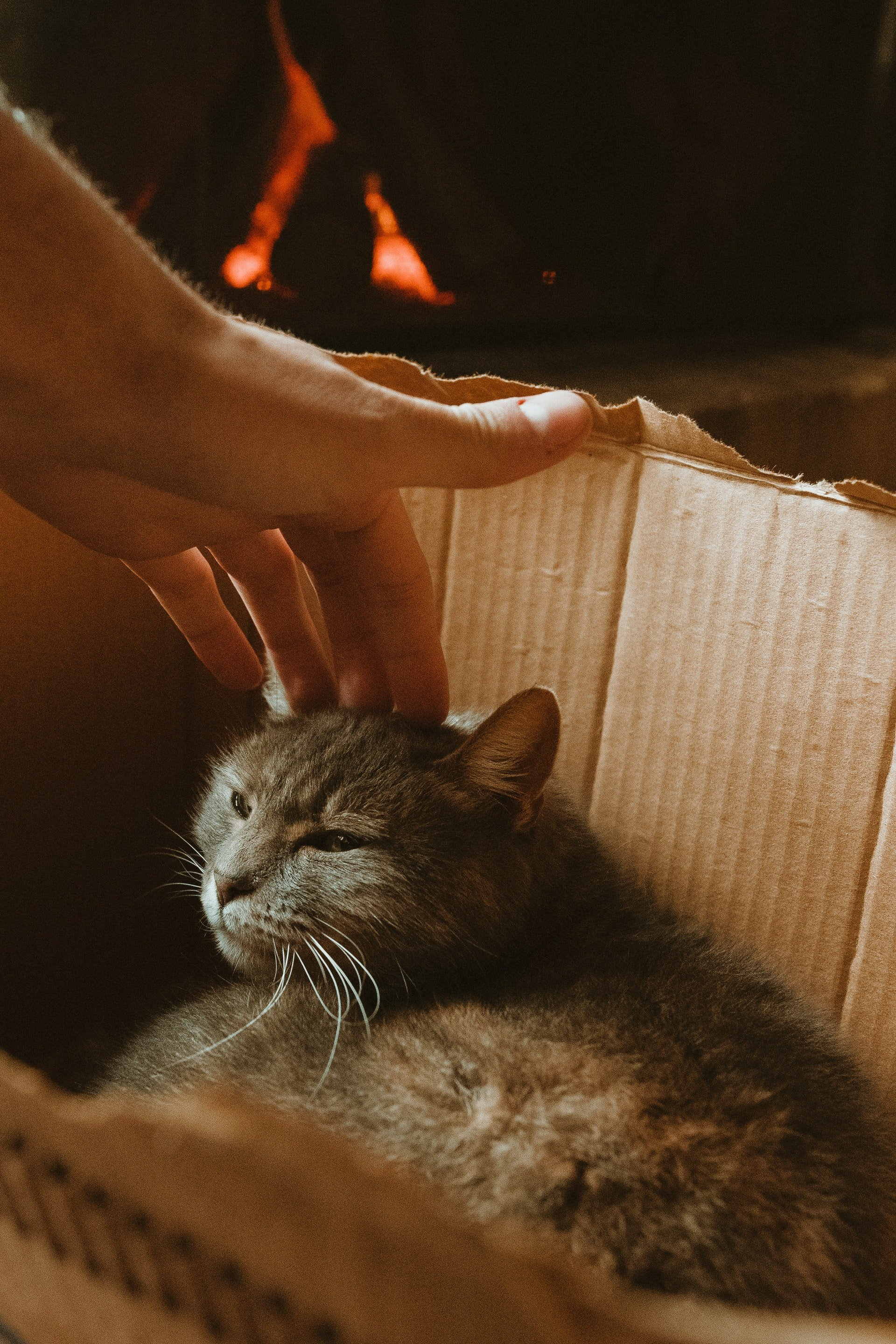 Person's hand petting a cat lying in a box | Photo: Pexels/Agustín Garagorry