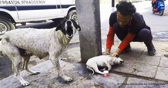 Perra ladra desesperada en la calle rogando por ayuda para su bebé hasta que alguien se acerca