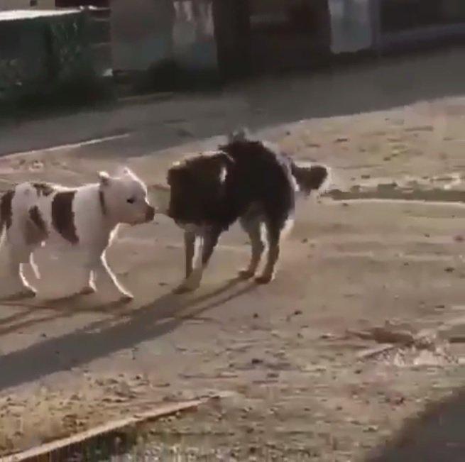 El perrito logró su cometido e intentó llevarse a la mascota.    Fuente: Instagram/natasha_nvrs