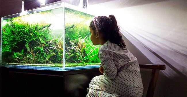 Familia fue puesta en cuarentena tras intoxicarse con corales mientras limpiaban su pecera