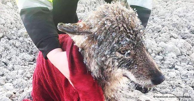 Corren a salvar a un perro de un lago helado sólo para descubrir que en realidad no era un perro