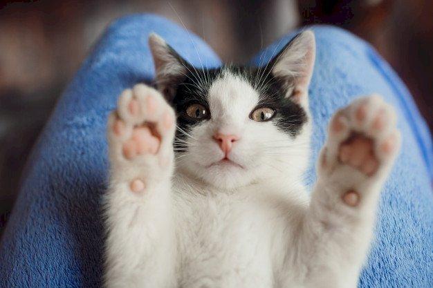 Gato patas arriba. | Foto: Freepik