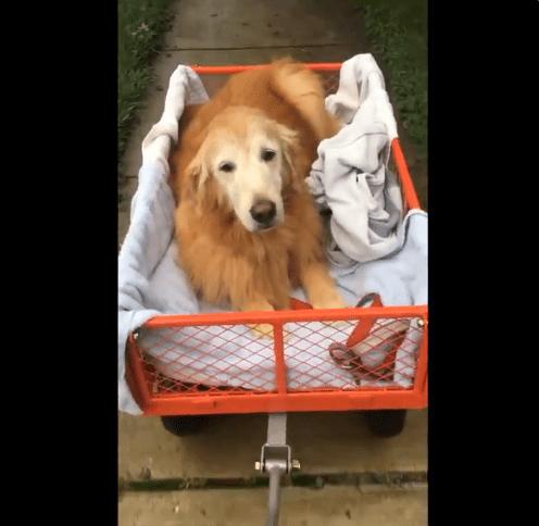 Maggie dans un chariot avec un lit | Twitter /The Golden Ratio