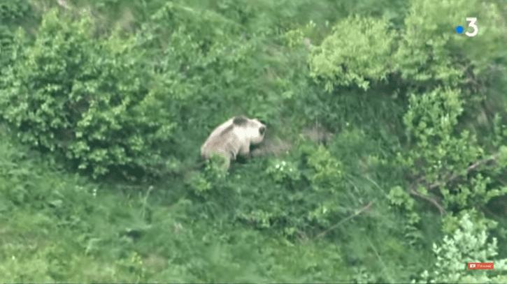 Un ours filmé par un enfant de 9 ans au cours d'une randonnée | Youtube/France 3 Occitanie