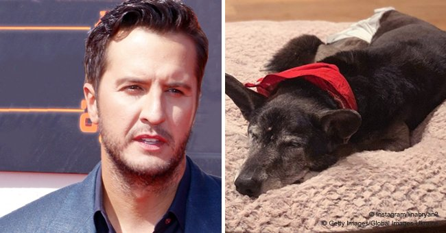 Luke Bryan's rescue dog dies 9 days after adoption, and here's the family's touching tribute