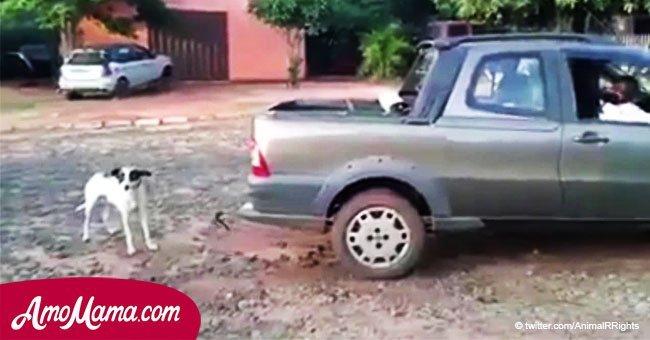 Mujeres ataron y arrastraron a cachorro detrás de auto para matarlo, y la razón es repugnante