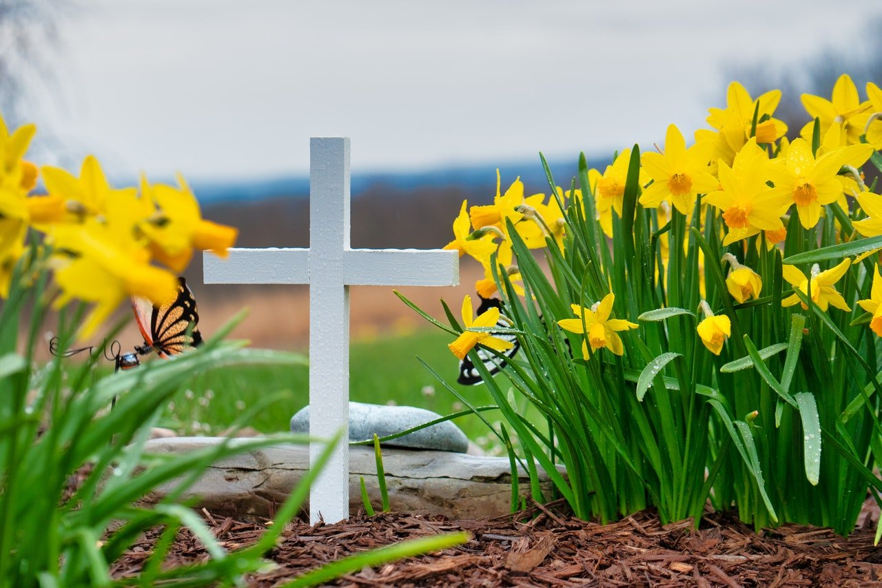 Photo of a beautiful flowers in a graveyard | Photo: Pexels