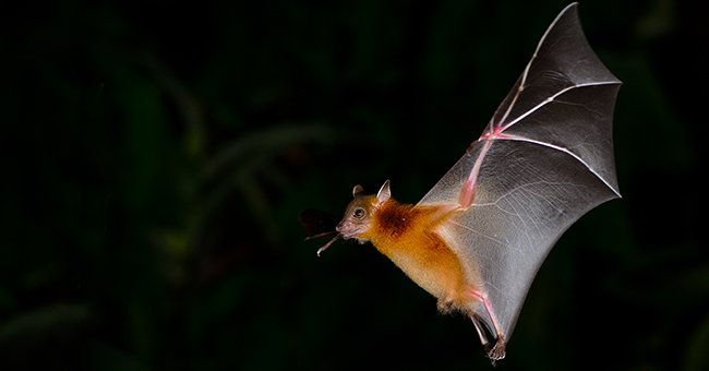 Daily Joke: A Bat Flew Into a Cave