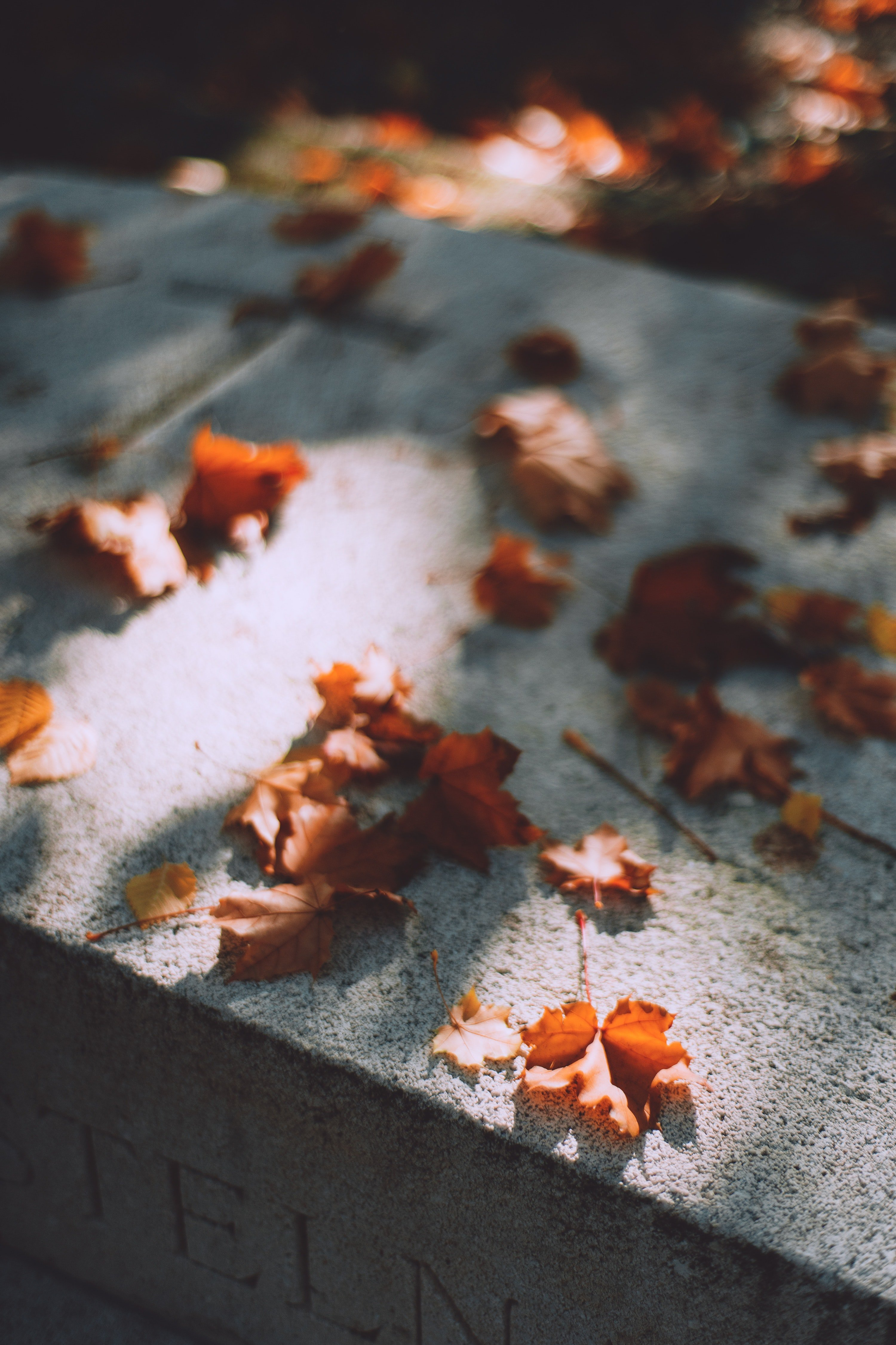 Autum leaves on a grave stone. | Source: Pexels/  Maria Orlova