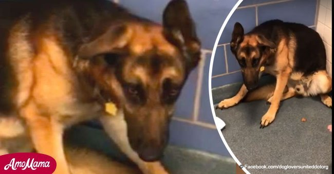 Loyal dog sits in a corner shaking after his family dump him at a shelter