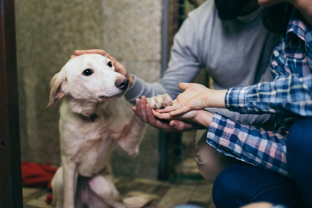 Hund gibt Pfote | Quelle: Shutterstock