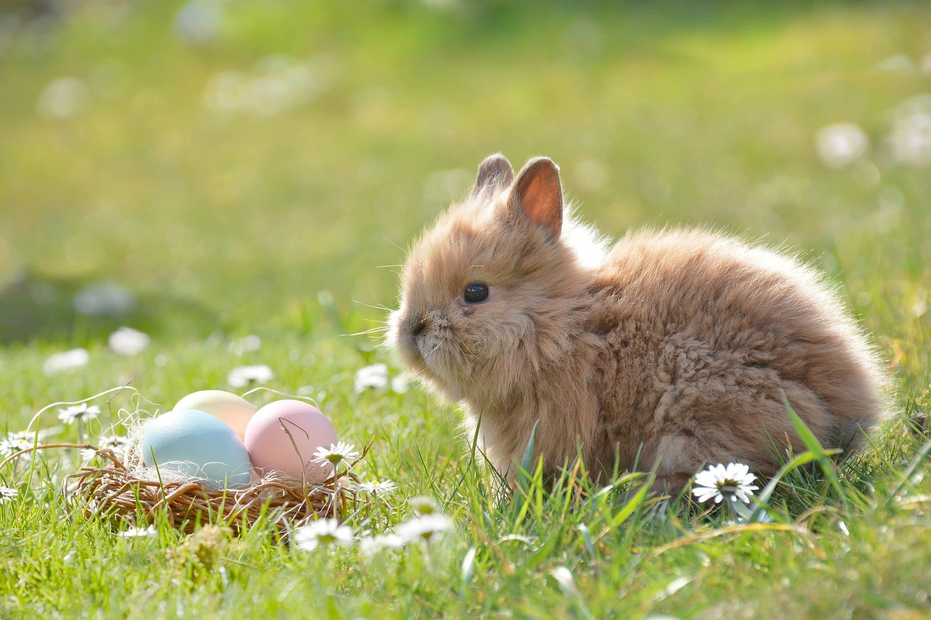 A small bunny and some easter eggs | Source: Pixabay