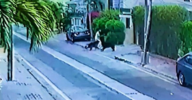 Two dogs are spotted attacking a man as he walked by   Photo: Twitter/ComicsByMajid