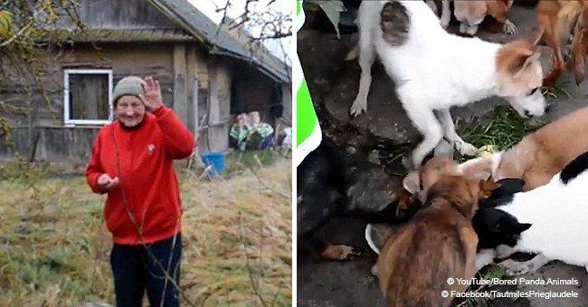 11 chiens affamés ont été trouvés vivant dans la maison d'une mamie avec elle dans de mauvaises conditions