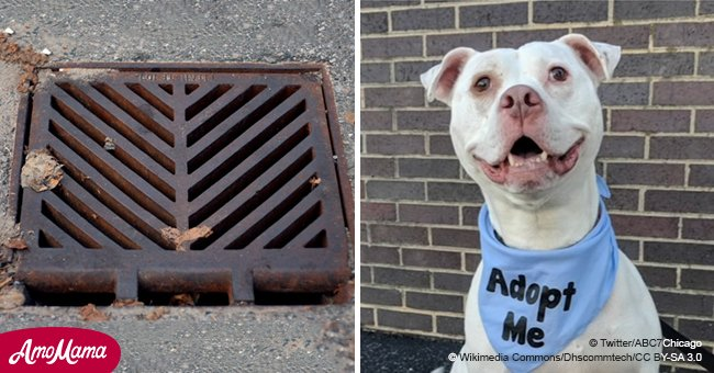 Kittens trapped in a storm drain rescued from death - now they owe their lives to a shelter dog