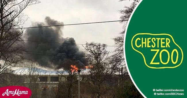 Major fire at Chester Zoo threatens the lives of thousands of visitors and animals