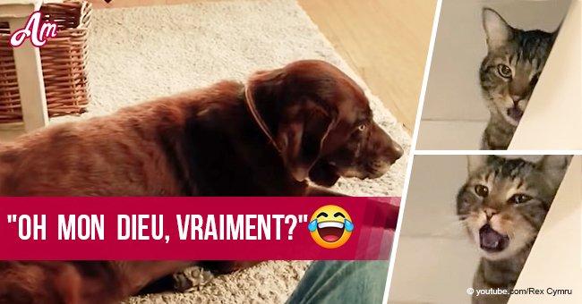 Une vidéo amusante du chien qui pète et du chat qui vomit a pris Internet à l'assaut