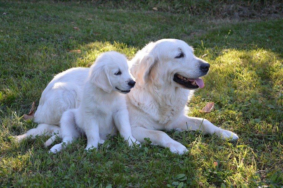 Une chienne et son chiot. l Source: Pixabay