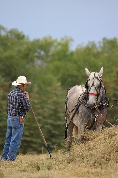 A farmer and his trusted horse. | Photo:Pixabay