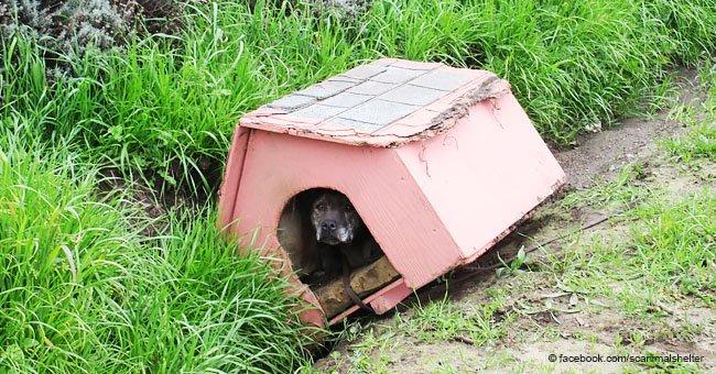 Perra fue atada a su propia casa y abandonada, no podía hacer nada más que esperar por ayuda