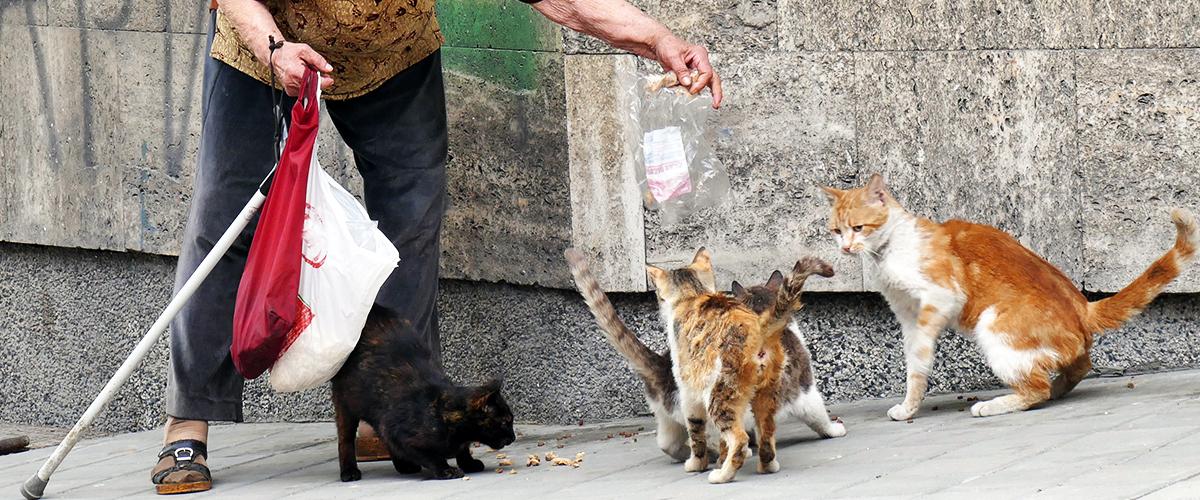 Une septuagénaire condamnée à la prison pour avoir nourri des chats errants